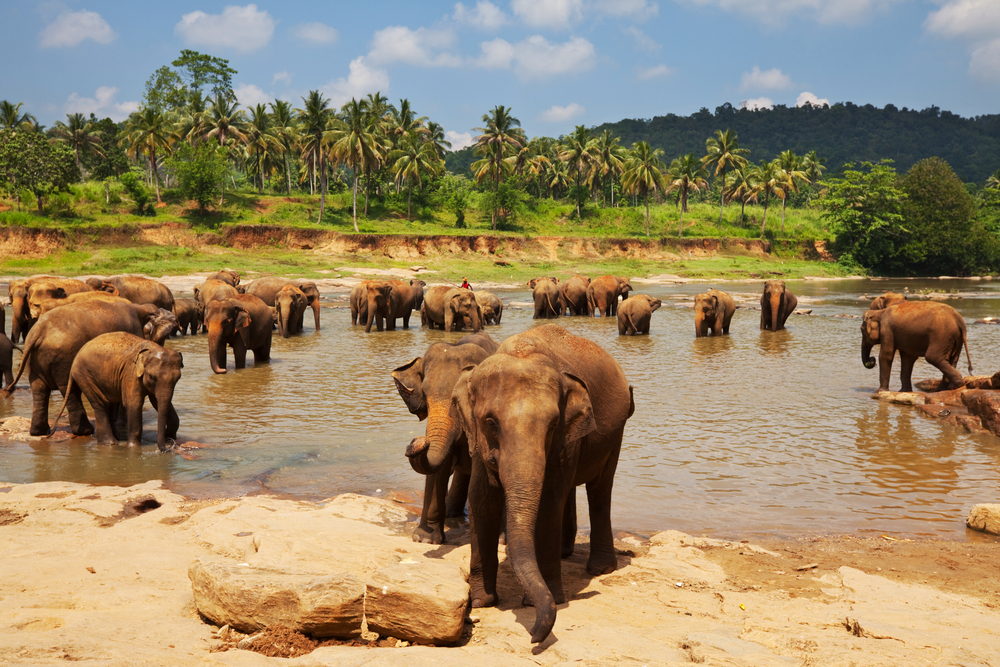 Wildlifesafari's in Sri Lanka