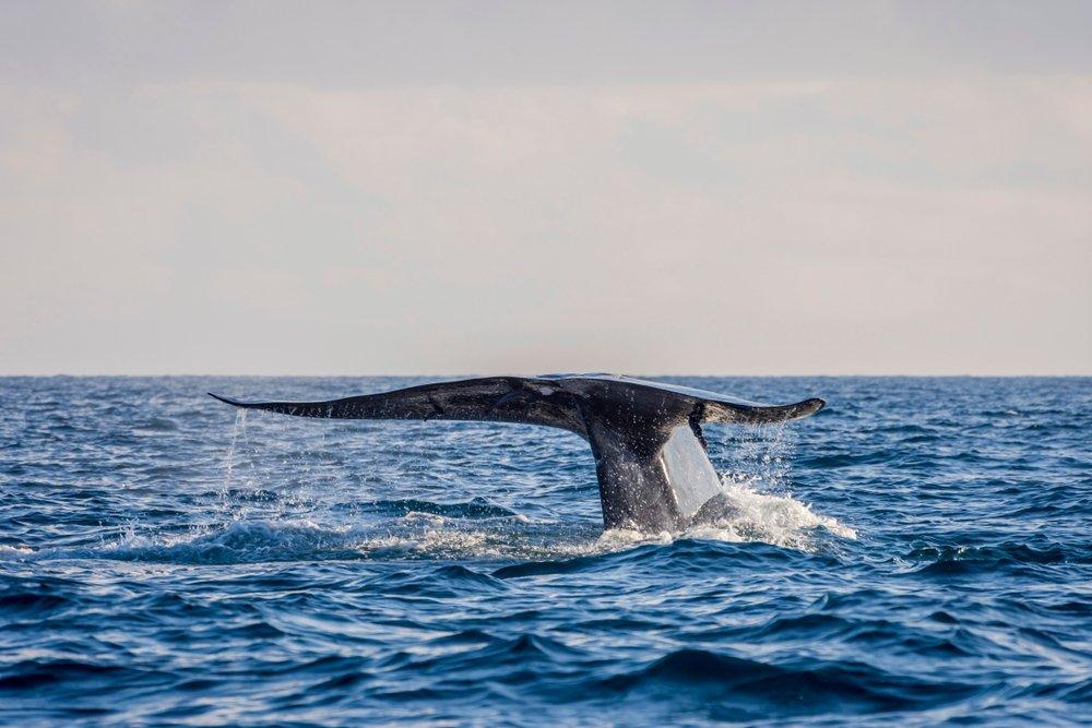 Walvissen en dolfijnen in Sri Lanka