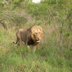 Safari in Zuid-Afrika