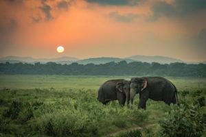 Travel tips voor een onvergetelijke reis door Sri Lanka