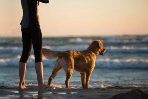 Op vakantie met hond